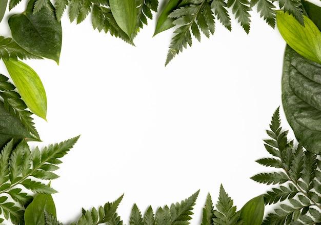 Vue de dessus fond de feuilles tropicales