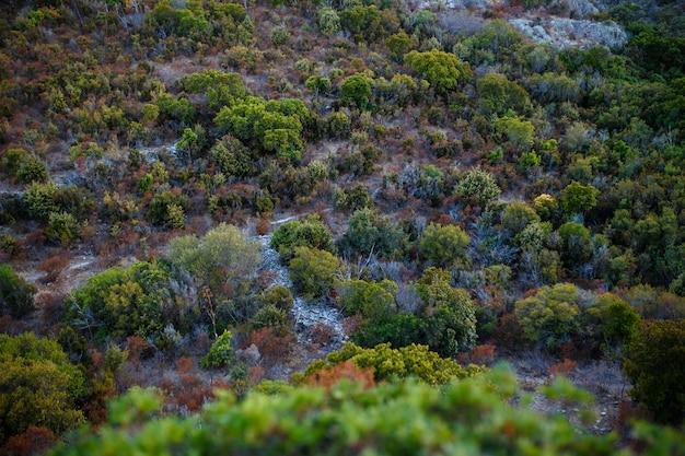 Vue de dessus, fond de nature incroyable. la couleur de la magnifique végétation sur une île de corsina.