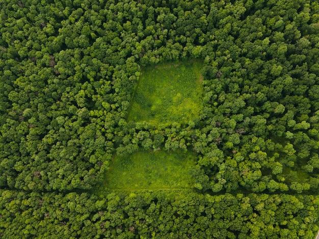 Vue de dessus de la forêt aérienne couleurs d'été forêt mixte campagne antenne boisée de drone sur une belle forêt verte dans un paysage rural usa
