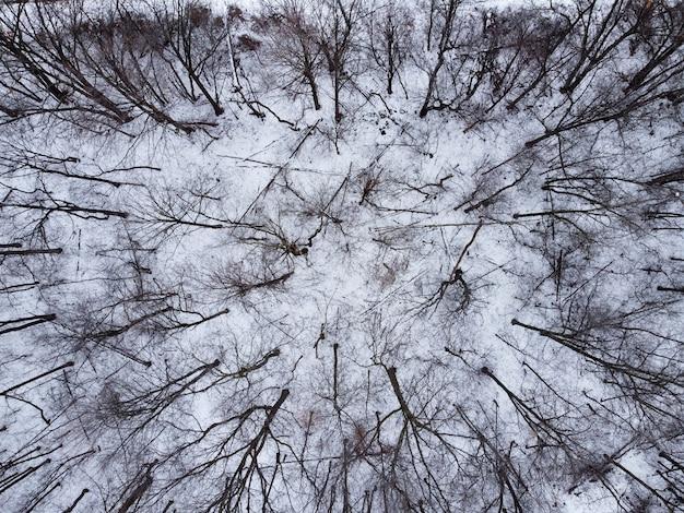 Vue de dessus d'une forêt avec des arbres couverts de neige
