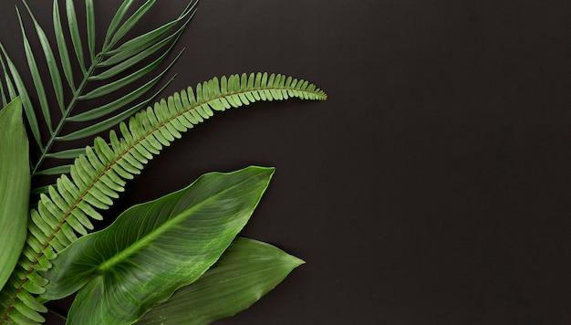 Vue de dessus de la fougère et de plusieurs types de feuilles