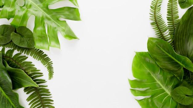 Vue de dessus de fougère et variété de feuilles avec espace copie