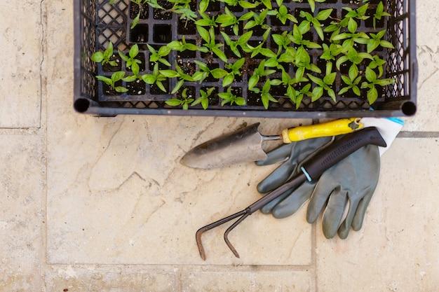 Vue de dessus des gants gris de jardinage, des pousses de poivre, une petite pelle et un râteau sur fond de béton. plantation de printemps. fond de pousses vertes avec espace de texte. concept de travail de jardin de printemps. autosuffisance.