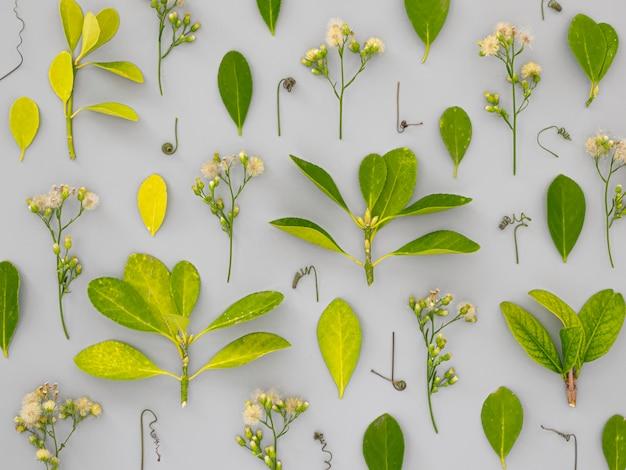 Vue de dessus groupe de feuilles et de fleurs