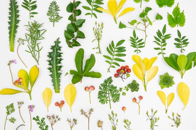 Vue de dessus groupe de feuilles vertes et de fleurs