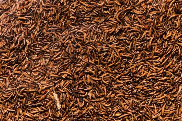 Vue de dessus des larves d'insectes cuits