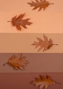 Vue de dessus des lignes monochromes avec des feuilles