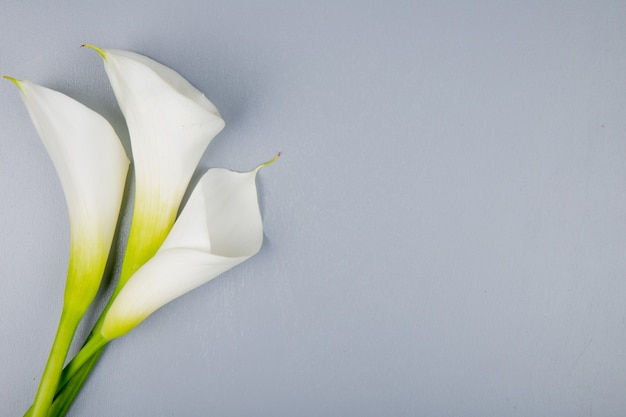 Vue de dessus des lis calla de couleur blanche isolé sur fond gris avec copie espace