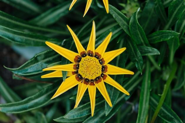 Vue de dessus macro shot de belle fleur jaune