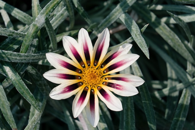 Vue de dessus macro shot de belle fleur