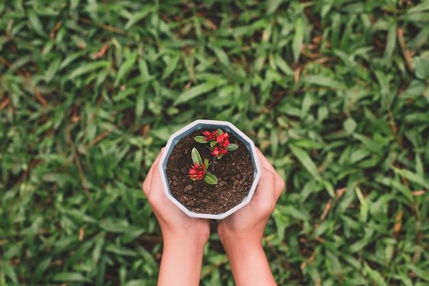 Vue de dessus de la main tenant une plante en pot avec de l'herbe verte