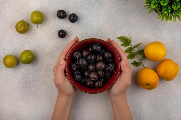 Vue de dessus des mains féminines tenant un bol rouge avec prunelles violet foncé avec des pêches fraîches avec des prunes cerises vertes sur fond blanc