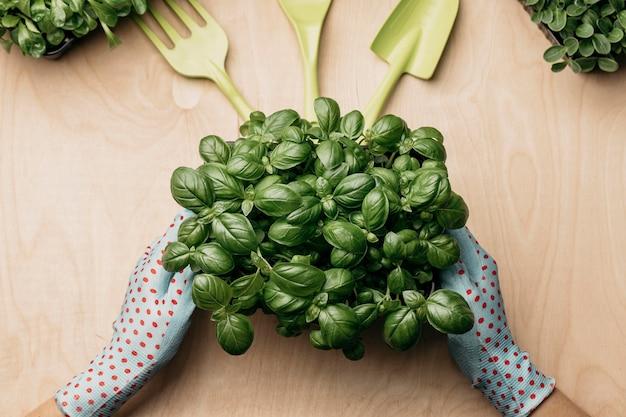 Vue de dessus des mains avec des gants tenant des plantes
