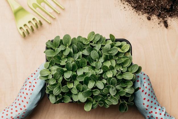 Vue de dessus des mains avec des gants tenant de la verdure