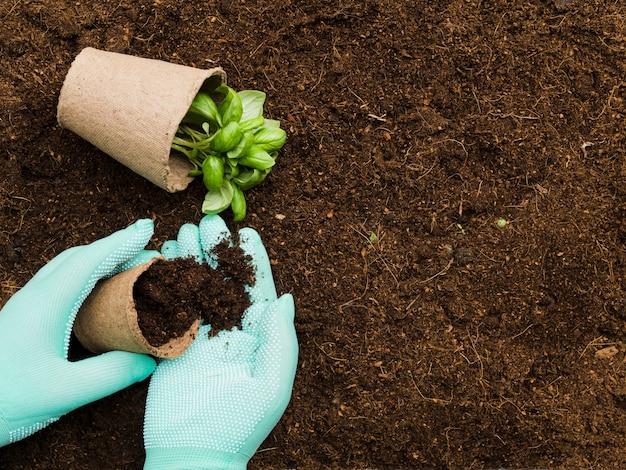 Vue de dessus des mains manipulant des plantes