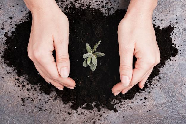 Vue de dessus des mains et des plantes dans le sol