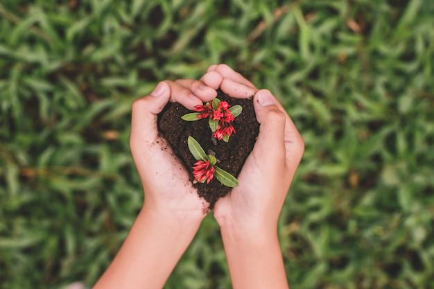 Vue de dessus des mains tenant la plante à graines en forme de coeur