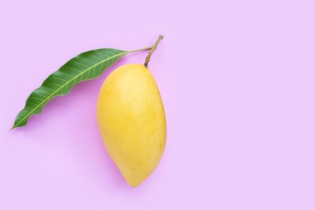 Vue de dessus de la mangue jaune sur fond rose.