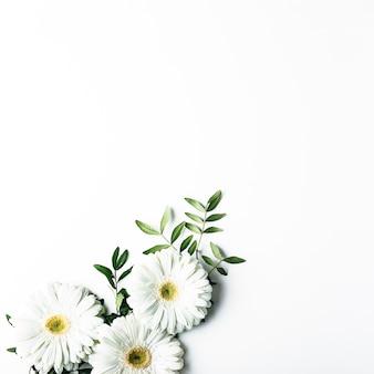 Vue de dessus de marguerites blanches