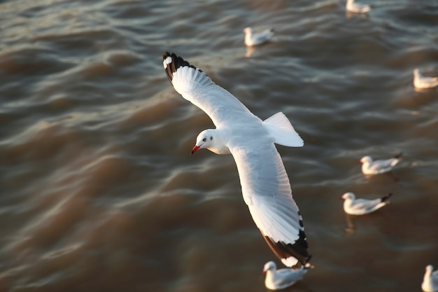 Vue de dessus des mouettes volantes dans l'océan