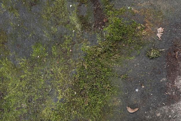 Vue de dessus mousse sur le sol