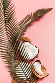 Vue de dessus de noix de coco avec plante