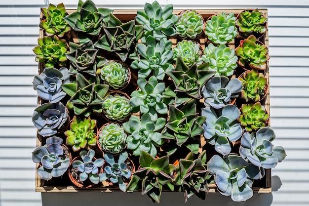 Vue de dessus de nombreux types de plantes succulentes dans la culture en pots pour créer une composition botanique d'art moderne