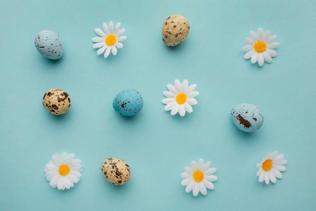 Vue de dessus des oeufs de pâques avec des fleurs de camomille