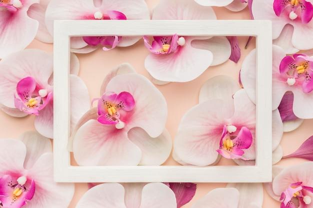 Vue de dessus des orchidées avec cadre
