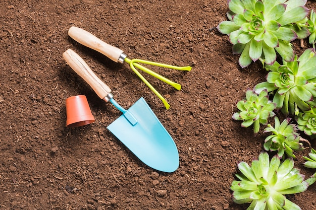 Vue de dessus des outils de jardinage sur le sol