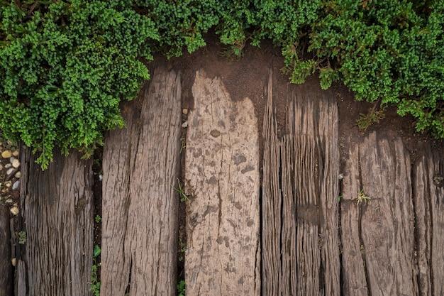 Vue de dessus de passerelle en bois dans le jardin avec des feuilles vertes au printemps.