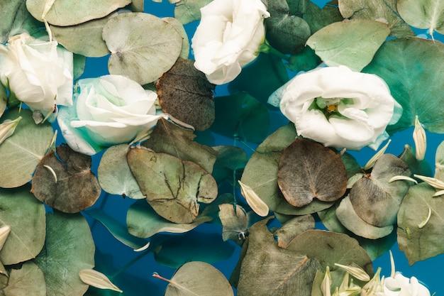 Vue de dessus des pétales et des feuilles dans l'eau bleue