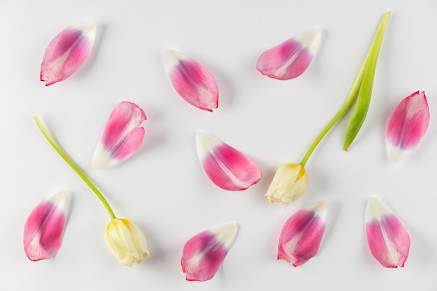Vue de dessus pétales de fleurs