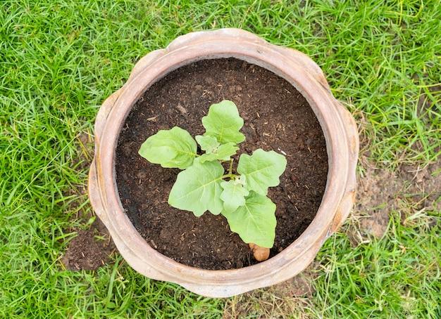 Vue de dessus d'une petite plantation d'arbres en pot