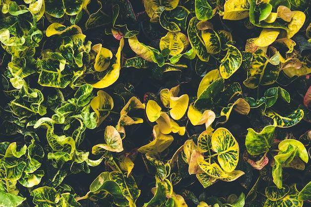 Vue de dessus d'une petite plante dans le jardin