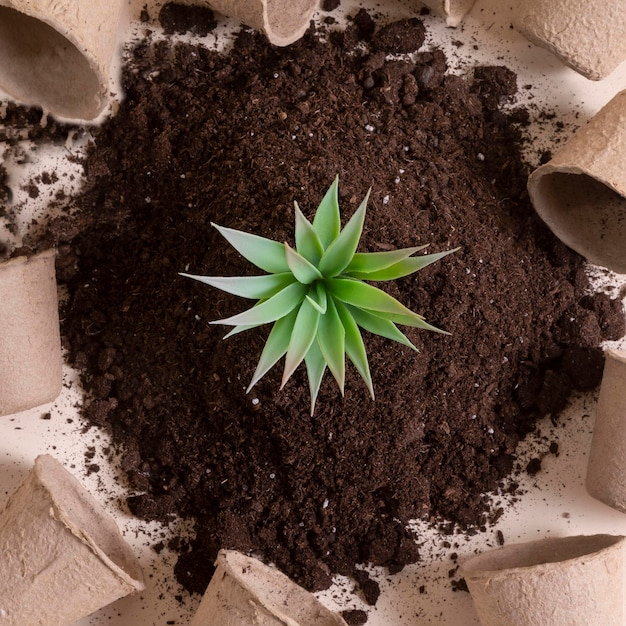 Vue de dessus avec petite plante