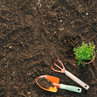 Vue de dessus de la plantation sur le sol