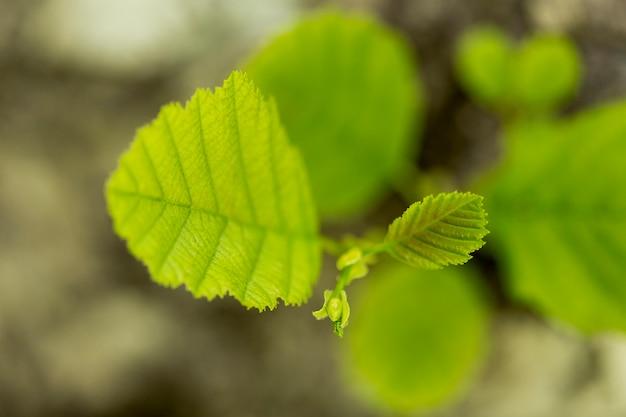 Vue de dessus plante laisse avec un arrière-plan flou