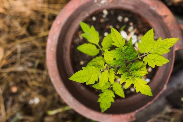 Vue de dessus plante poussant dans un pot