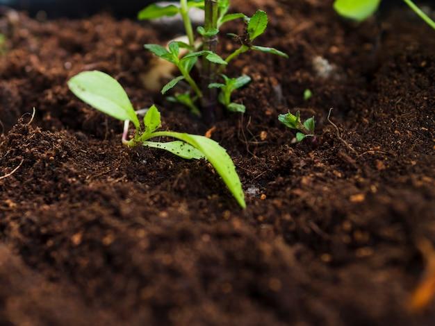 Vue de dessus de la plante sur le sol
