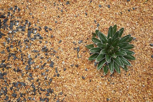 Vue de dessus de la plante succulente 2
