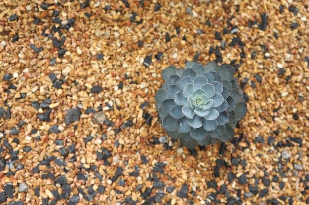 Vue de dessus de la plante succulente 3