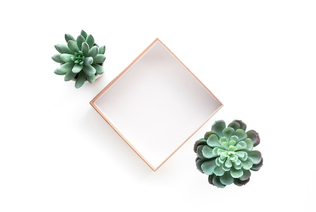 Vue de dessus de plante succulente avec cadre de boîte sur fond blanc.pour la mise en page de conception décorative