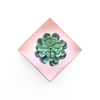 Vue de dessus de plante succulente sur fond blanc pour la mise en page de conception décorative