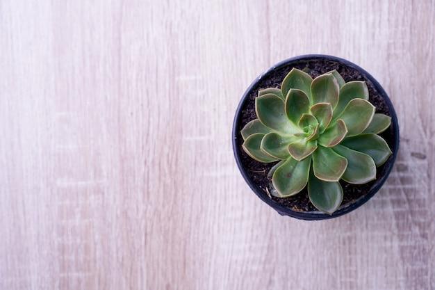 Vue de dessus plante succulente en pots sur plancher de bois.
