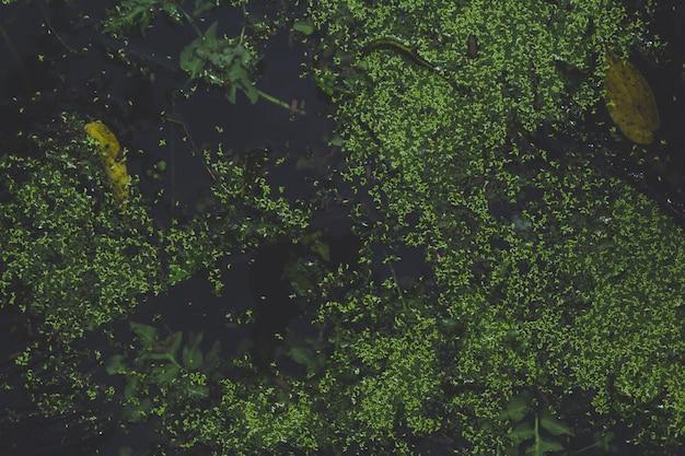 Vue de dessus des plantes aquatiques
