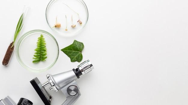 Vue de dessus des plantes et des articles de laboratoire