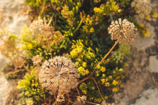 Vue de dessus des plantes colorées