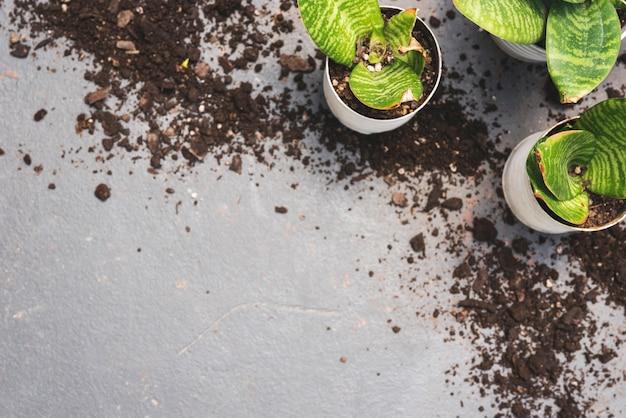 Vue de dessus des plantes et du sol