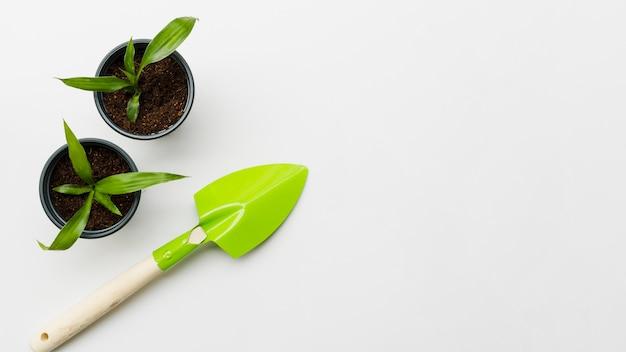 Vue de dessus des plantes avec une pelle